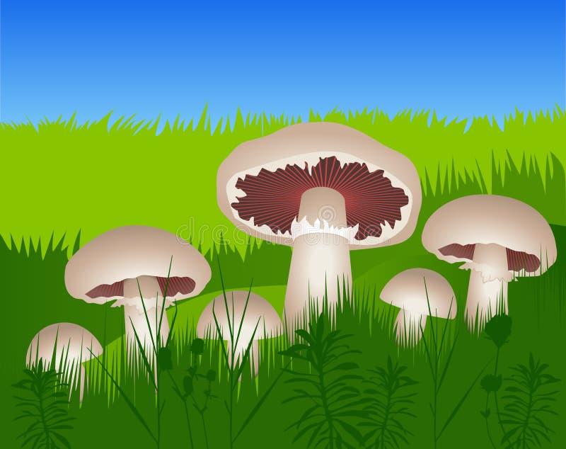Pilze im Gras lizenzfreie abbildung