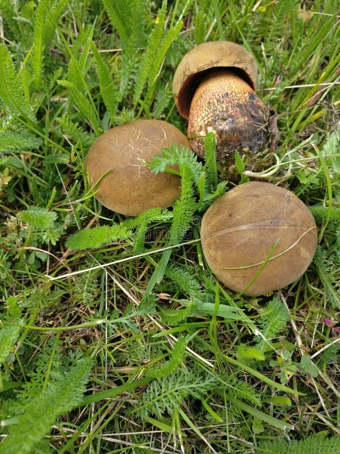 Pilze im Stadtpark stockbilder