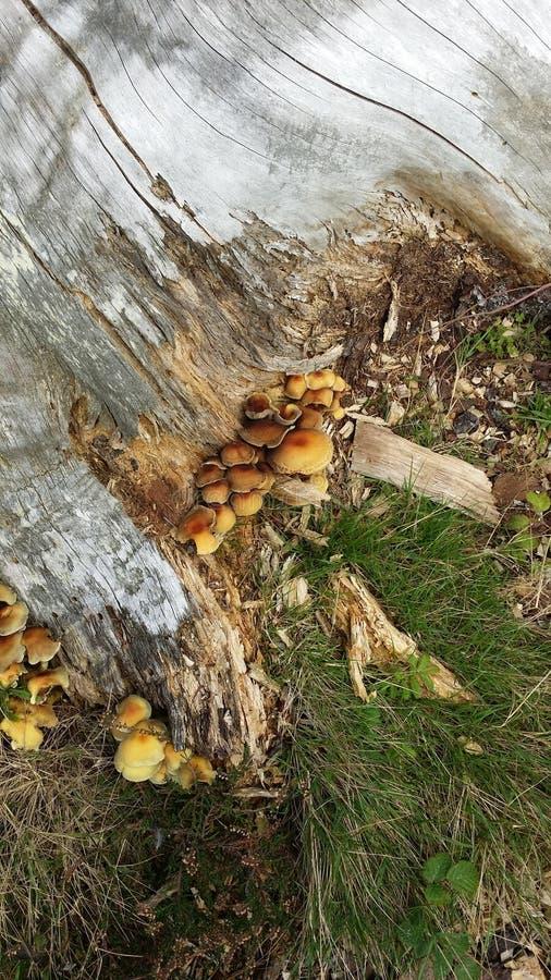 Pilze im Wald lizenzfreie stockfotos