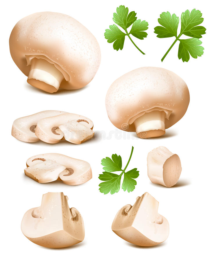 Pilze mit Petersilie lizenzfreie abbildung