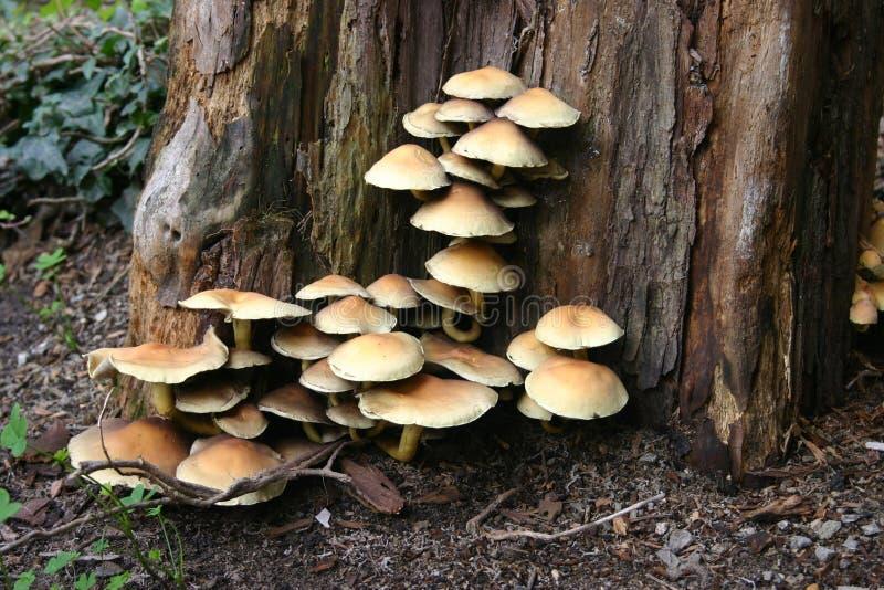 Pilze reichlich stockbilder