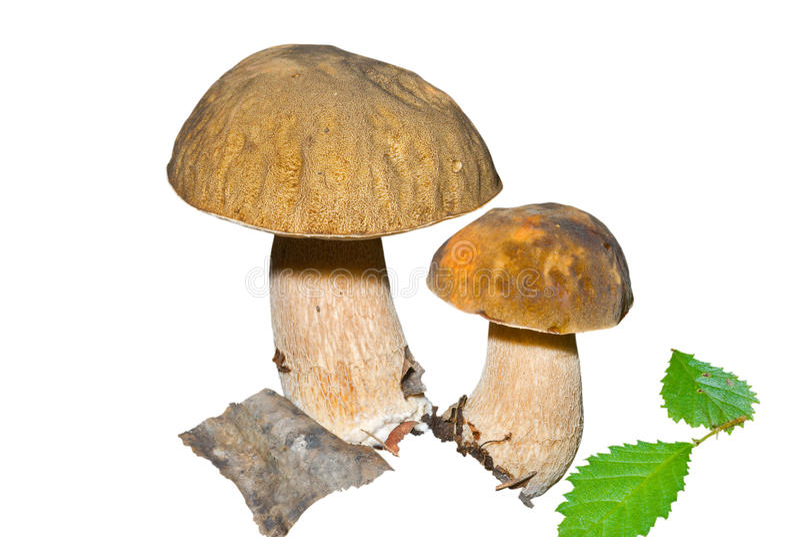 Pilze (Umhang) 7 stockbilder