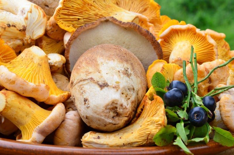 Pilze und Blaubeeren lizenzfreie stockfotos