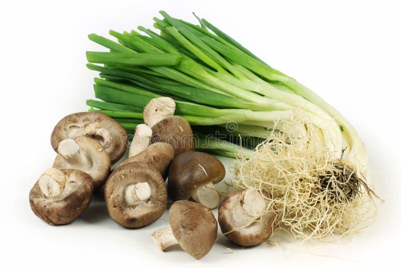 Pilze, Zwiebeln getrennt auf Weiß stockfoto