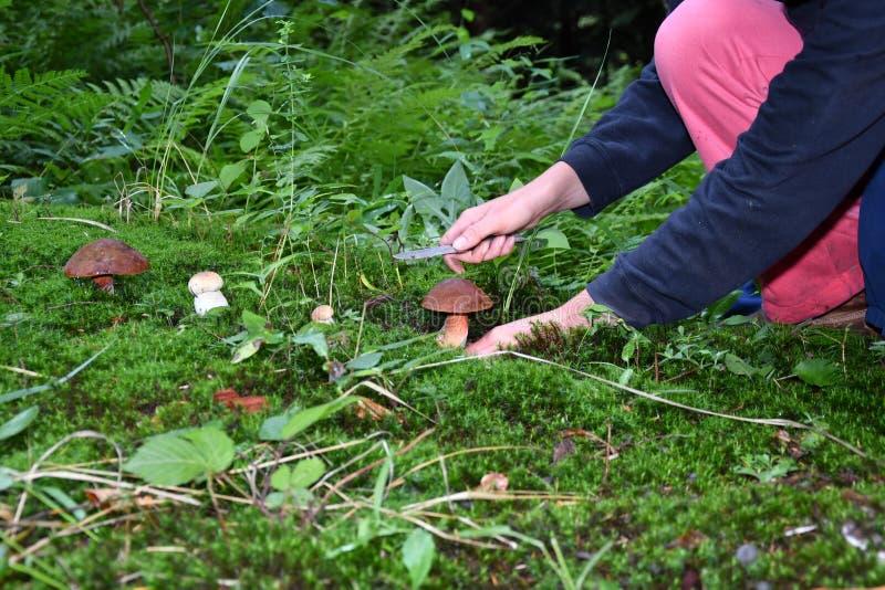 Pilzkopfbildung in den Wald lizenzfreies stockfoto