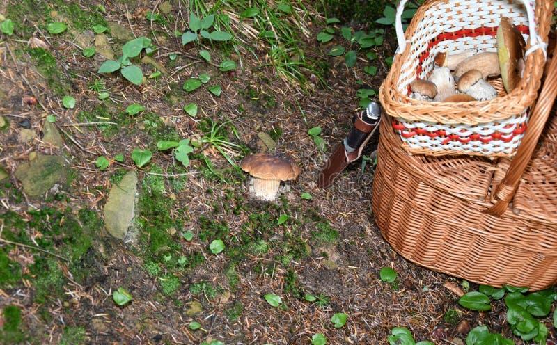 Pilzkopfbildung in den Wald lizenzfreies stockbild