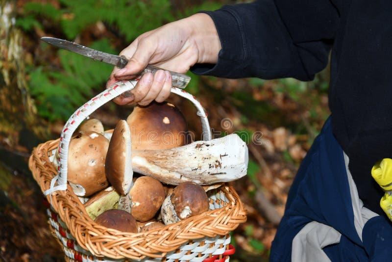Pilzkopfbildung in den Wald lizenzfreie stockbilder