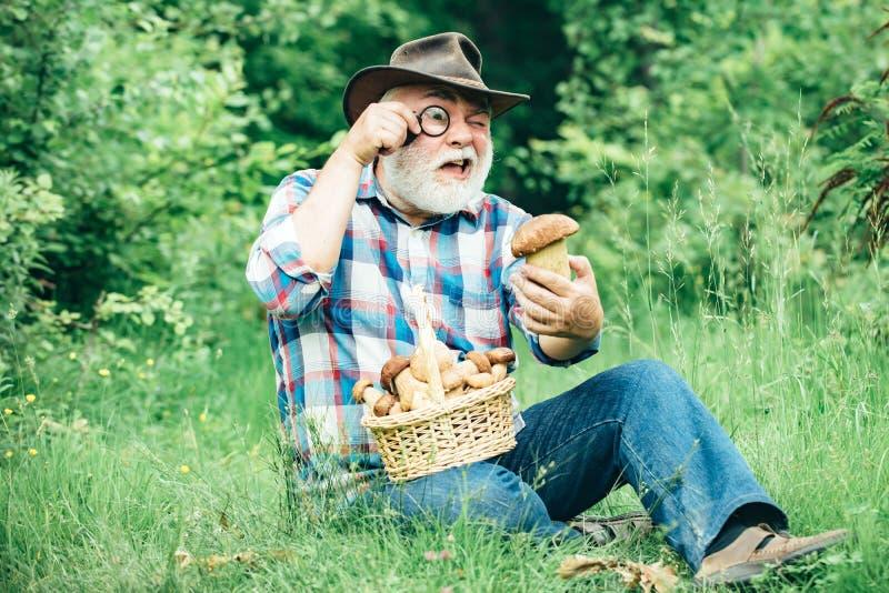 Pilzkopfbildung in Wald, gro?v?terliche Jagdpilze ?ber Sommerwaldhintergrund Großvater mit Korb von Pilzen lizenzfreie stockbilder