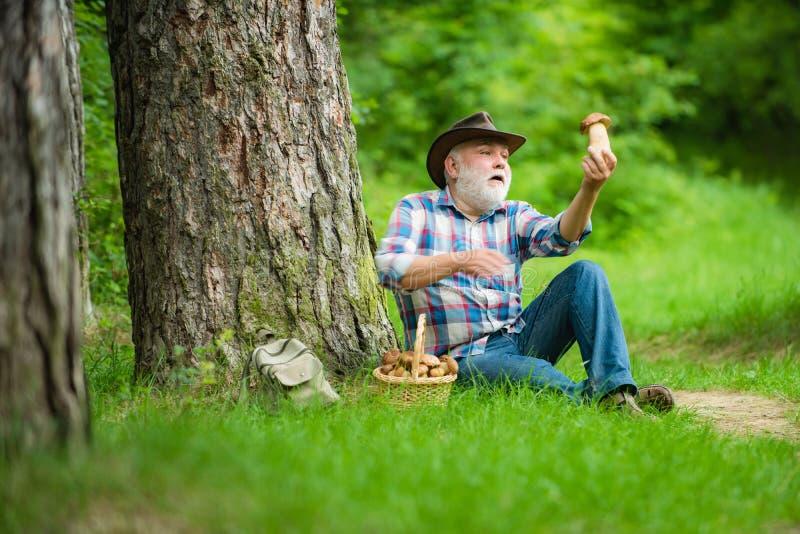 Pilzkopfbildung in Wald, gro?v?terliche Jagdpilze ?ber Sommerwaldhintergrund Mushroomer-Versammlung Pilz lizenzfreie stockfotos