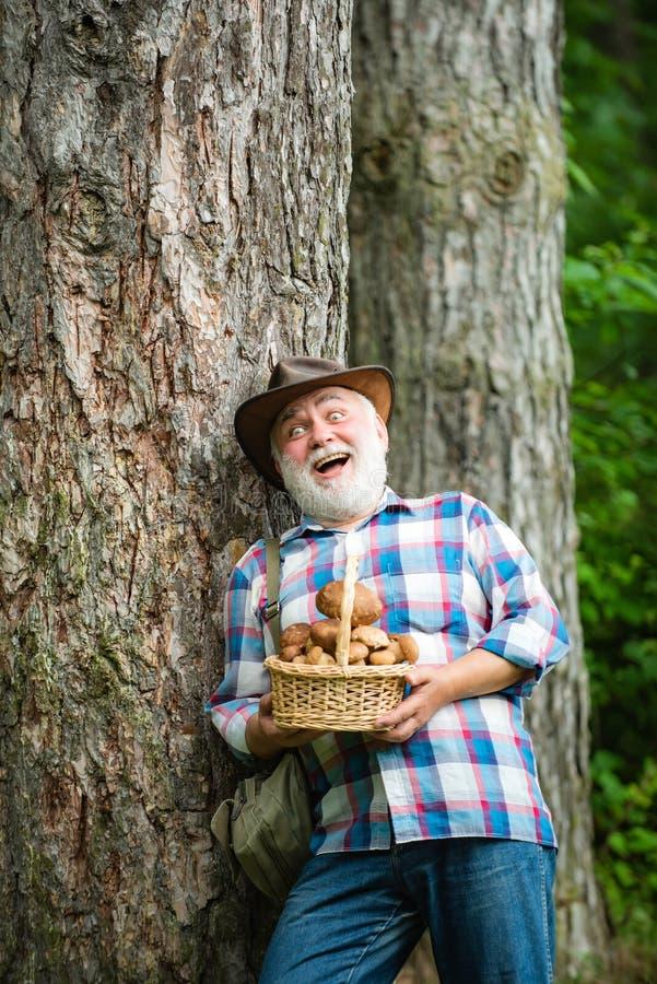 Pilzkopfbildung in Wald, gro?v?terliche Jagdpilze ?ber Sommerwaldhintergrund Pilze Glücklicher Mann, der a hält lizenzfreie stockfotografie