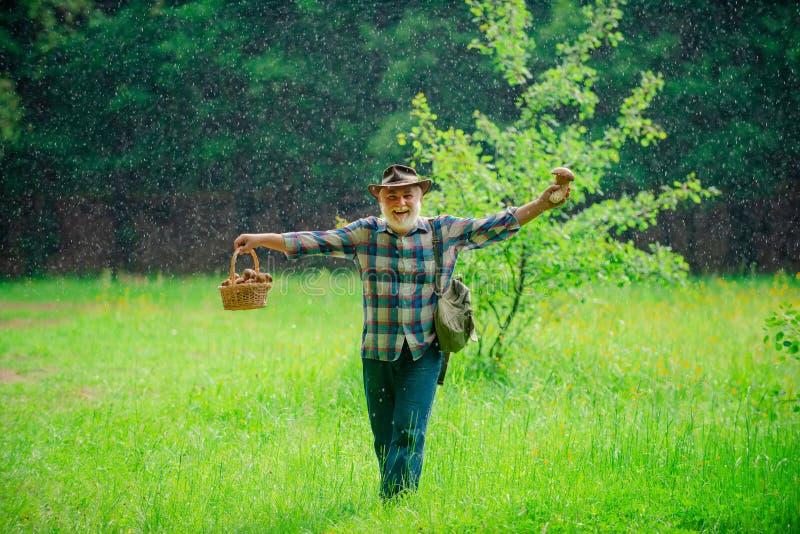 Pilzkopfbildung in Wald, gro?v?terliche Jagdpilze ?ber Sommerwaldhintergrund Ruhestand Lächelndes Mannsammeln stockfotos