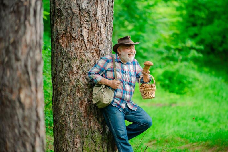 Pilzkopfbildung in Wald, gro?v?terliche Jagdpilze ?ber Sommerwaldhintergrund Sommerpilze Reifer Mann mit stockfotografie
