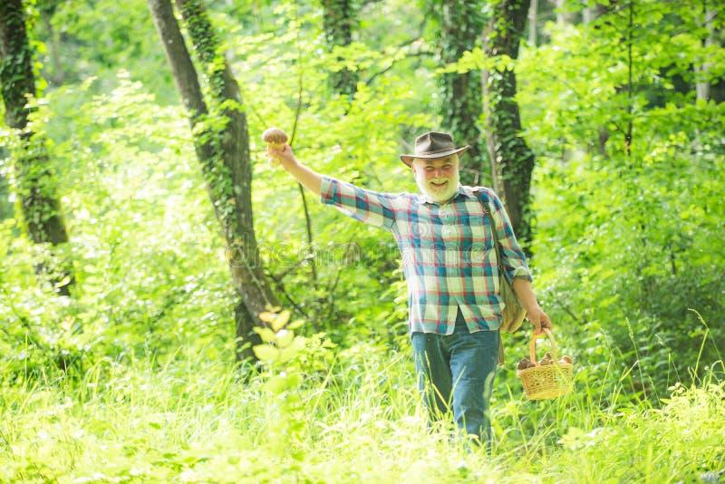 Pilzpfl?cker Pilze Pilzkopfbildung in Natur Frische Pilze in den Mannhänden lizenzfreie stockfotografie