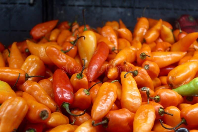 Pimentão vermelho e alaranjado mexicano foto de stock