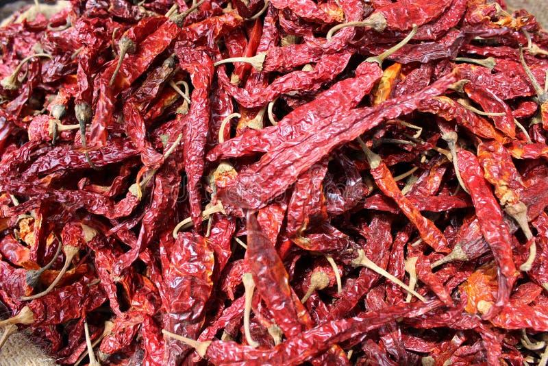 Pimentões vermelhos quentes secados prontos para ser usado ou pulverizado fotografia de stock