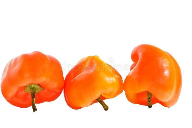 Pimenta colorida em um fundo branco imagem de stock
