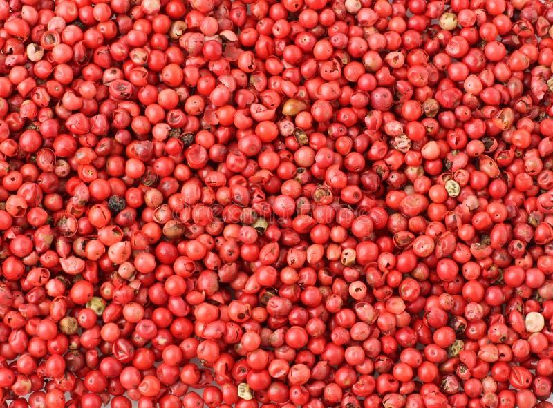 Pimenta cor-de-rosa fotografia de stock