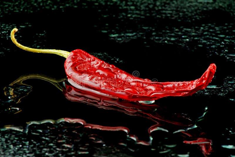 Pimenta de caiena vermelha molhada no preto fotografia de stock