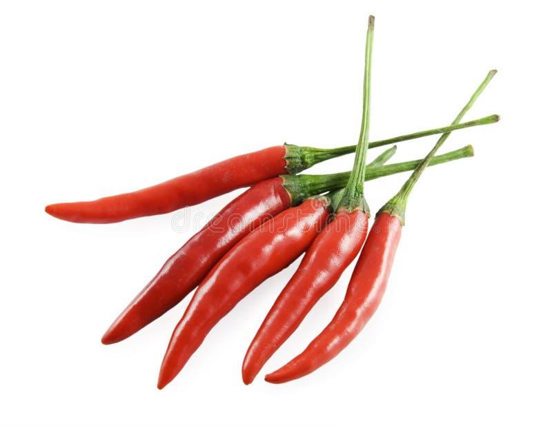 Pimenta de pimenta de Caiena vermelha fotografia de stock