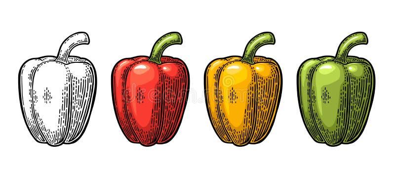 Pimenta de sino doce Ilustração gravada vintage do vetor ilustração do vetor