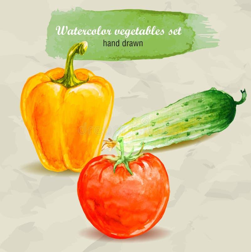 Pimenta doce, pepino e tomate de Bell Grupo tirado mão do vegetal da aquarela do vetor ilustração royalty free