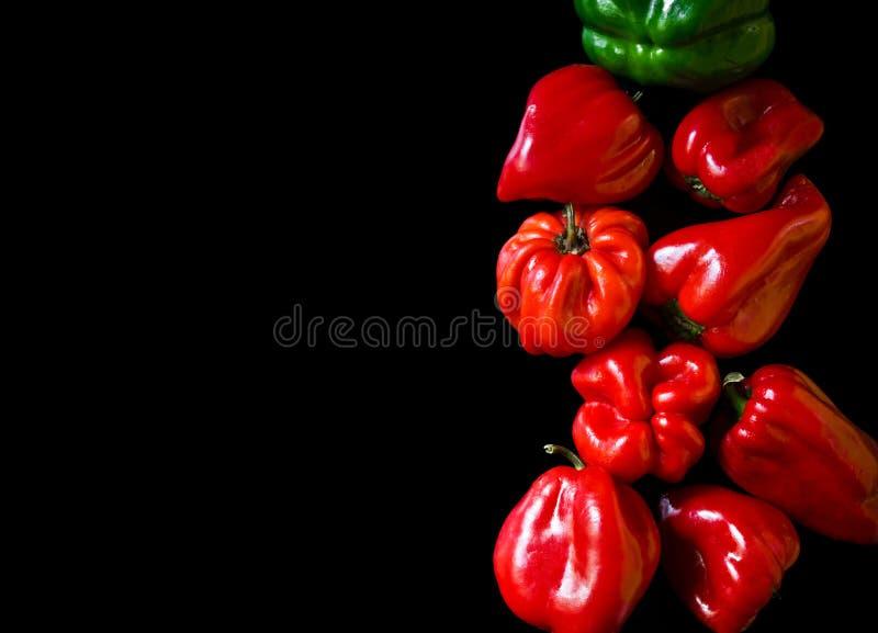 Pimentas coloridas em um fundo preto foto de stock royalty free