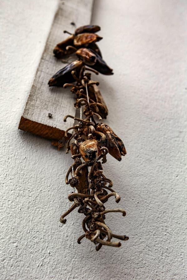 Pimentas de pimentão encarnados - Espelette fotografia de stock