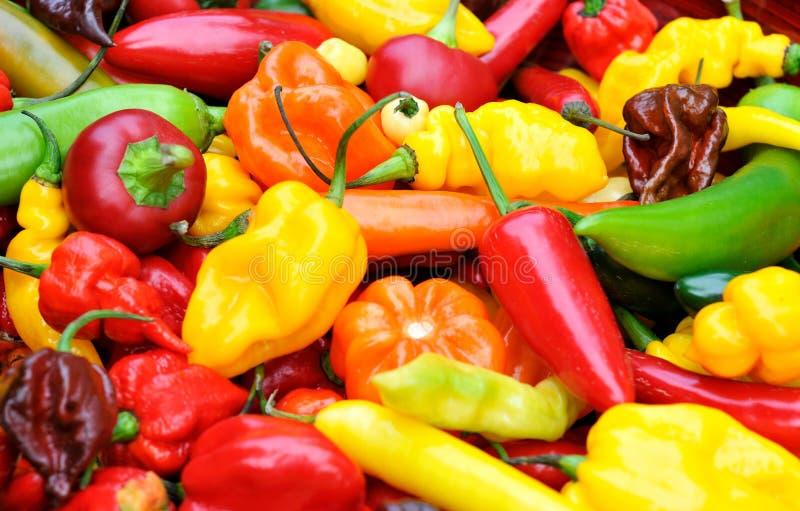 Pimentas de pimentão quente imagens de stock
