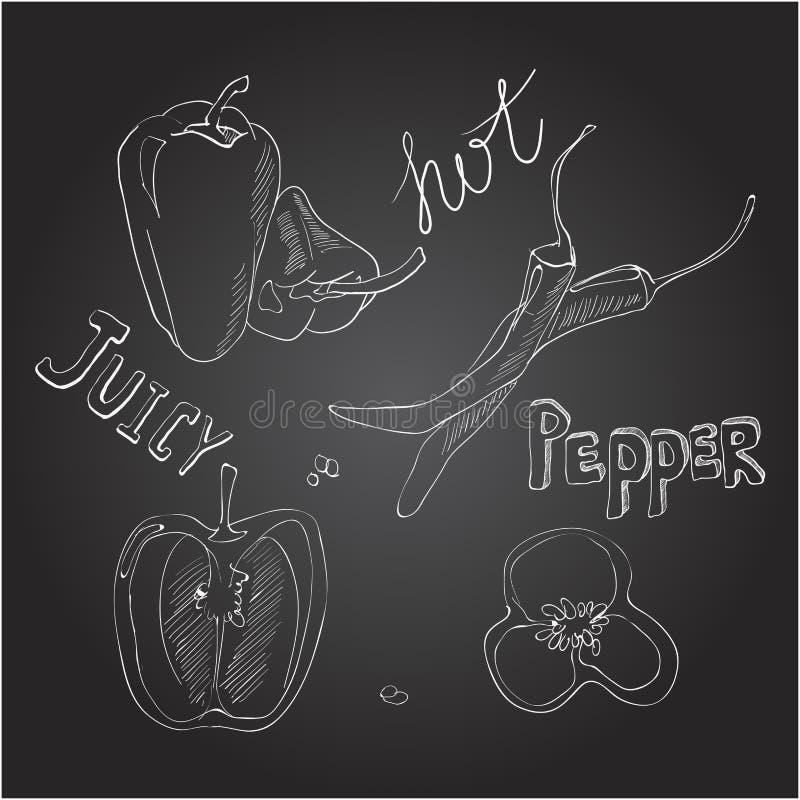Pimentas doces e quentes Grupo de vegetais tirados mão Ilustração do vetor no quadro ilustração royalty free