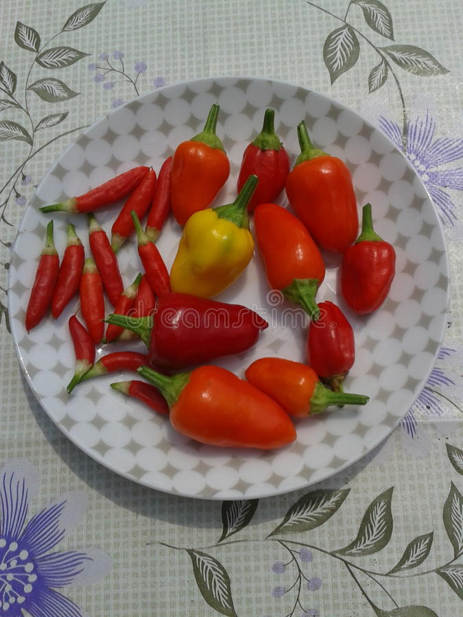 Pimentas vermelhas imagens de stock