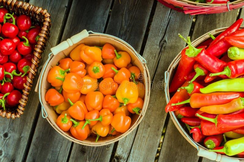 Pimentos alaranjados em uma cesta da colheita foto de stock