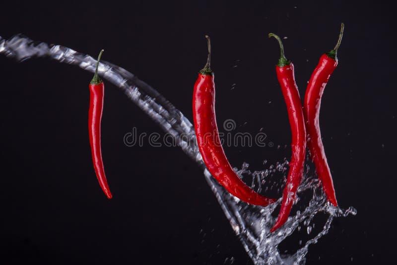 Pimentos de Cayenne atravessados com água imagens de stock