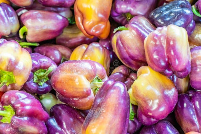 Pimentos doces ou pimentões multicoloridos, púrpura, com pigmentos de vermelho e amarelo Única variedade de pimentos de sino vend foto de stock royalty free
