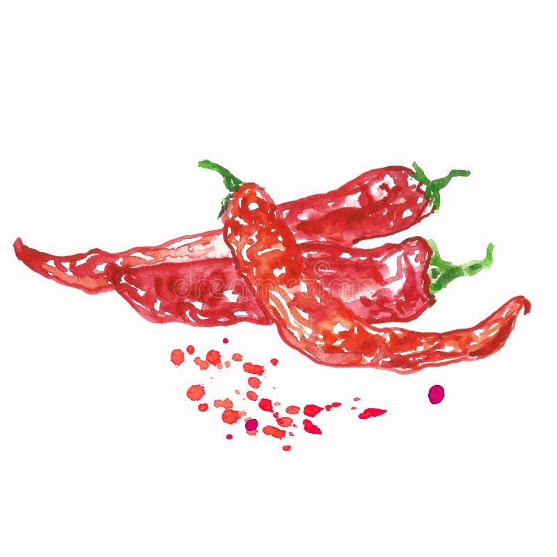 Pimienta de chile rojo de la acuarela con las manchas del color aisladas en el fondo blanco ilustración del vector