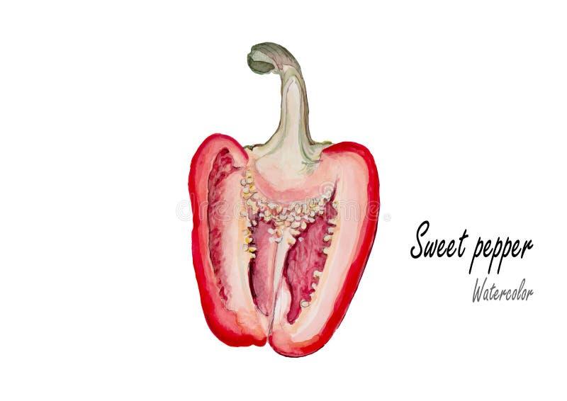 Pimienta dulce Pintura dibujada mano de la acuarela en el fondo blanco Ilustración del vector libre illustration