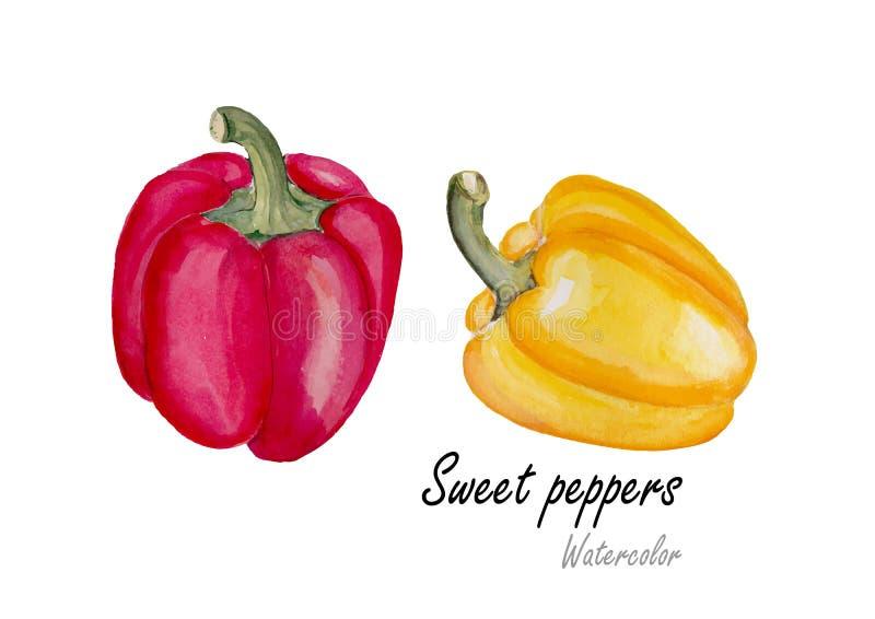 Pimienta dulce roja y amarilla Pintura dibujada mano de la acuarela en el fondo blanco Ilustración del vector ilustración del vector