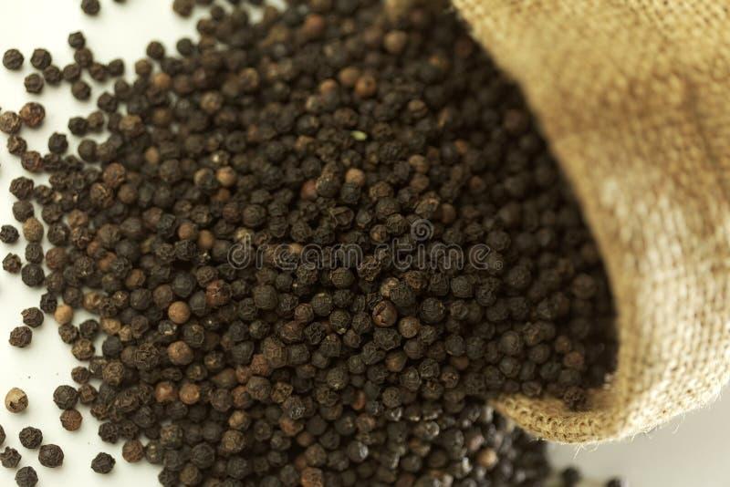 Pimienta especia-negra india imagen de archivo libre de regalías