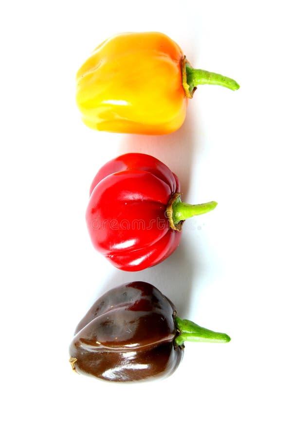 Pimientas de chile coloridas frescas del habanero aisladas en un fondo blanco, colores nacionales de Alemania, negro, rojo, oro foto de archivo libre de regalías
