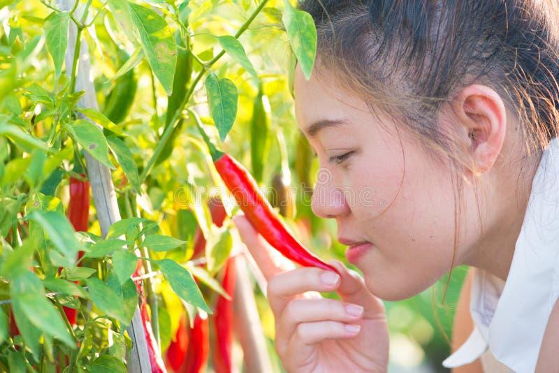 Pimientas de chile rojo y muchacha asiática imagenes de archivo