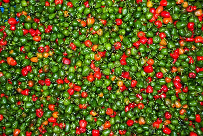 Pimientas de chiles en mercado en darjeeling la India imagen de archivo libre de regalías