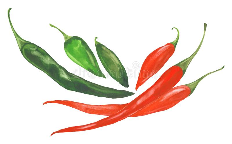 Pimientas de chiles de la acuarela ilustración del vector