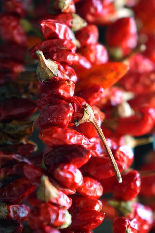 Pimientas de chiles rojos colgantes secadas fotografía de archivo libre de regalías