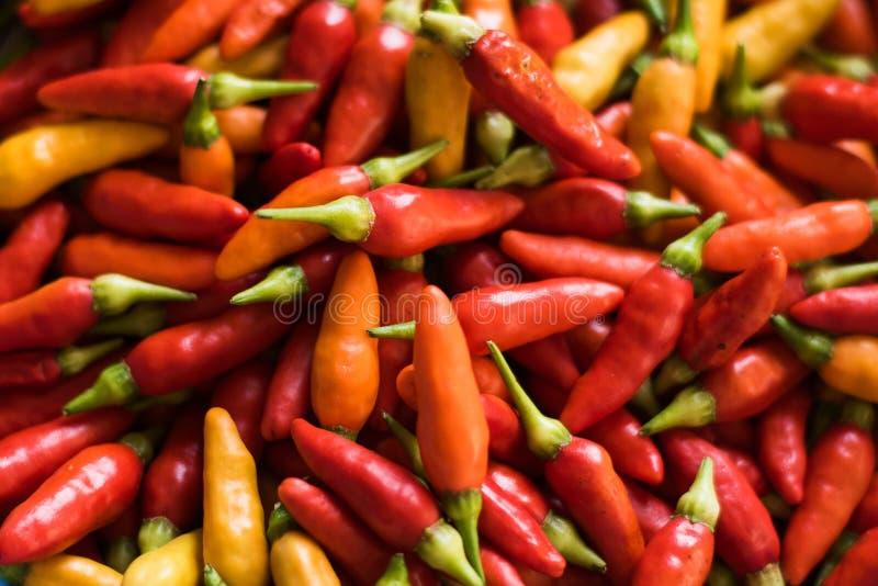 Pimiento picante de la pimienta de Tabasco en tres colores fotos de archivo libres de regalías