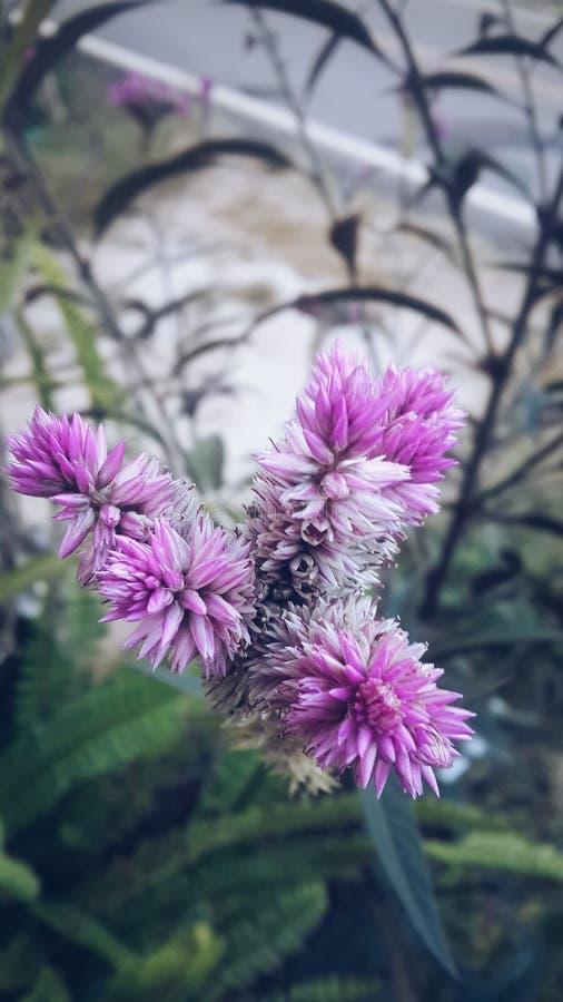 PinÄ·, blomma fotografering för bildbyråer