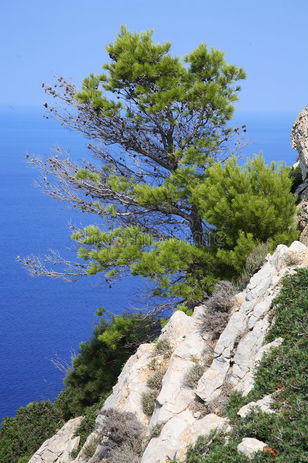 Pin-arbre photo libre de droits