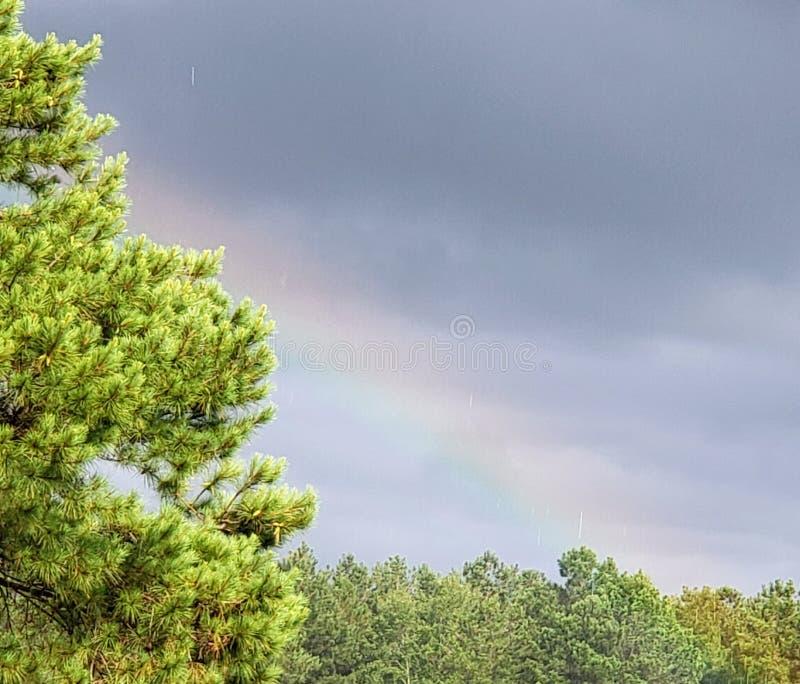 Pin d'arc-en-ciel photo libre de droits