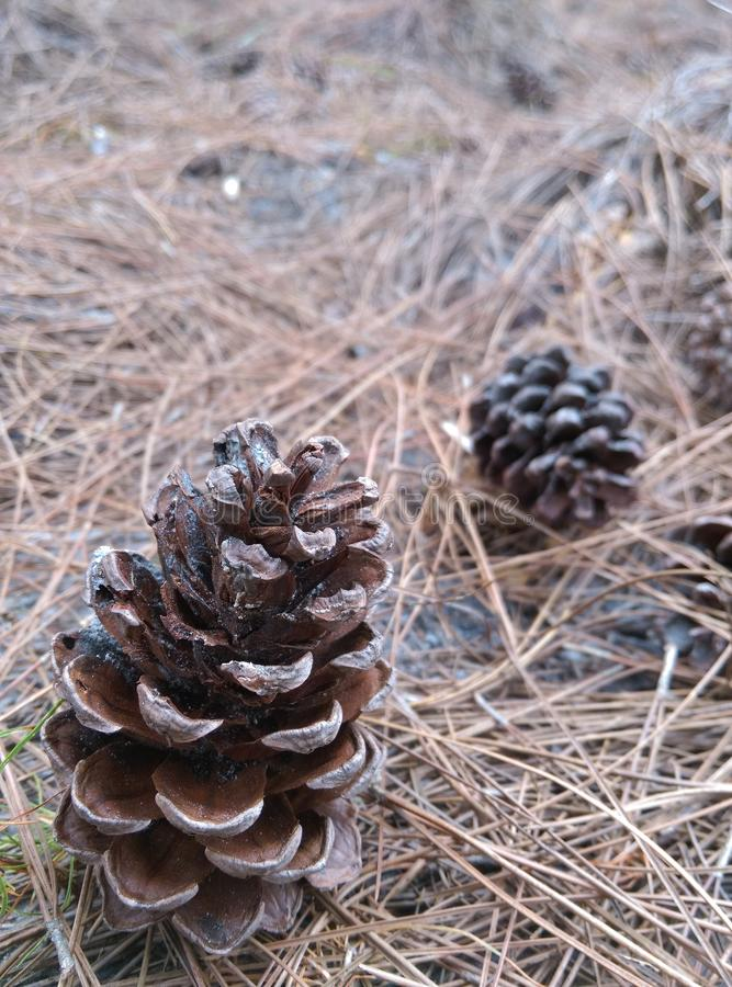 pin d'isolement par cône proche de fond vers le haut de blanc photo libre de droits