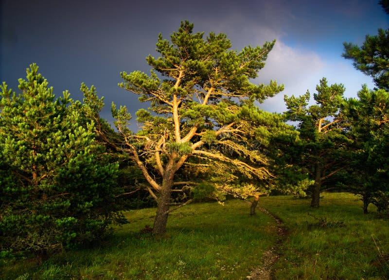 Pin dans le coucher du soleil photographie stock libre de droits