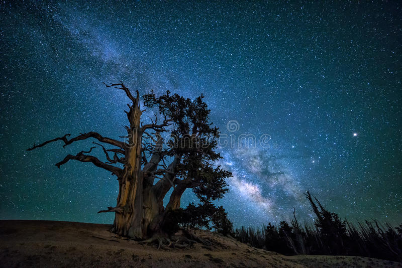 Pin de Bristlecone, galaxie de Milkyway, Utah images stock