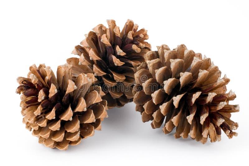 pin de cônes photographie stock libre de droits